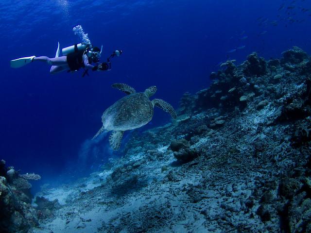 Shooting sea turtle