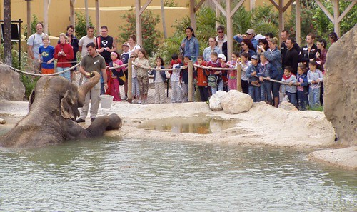 Terra Natura Benidorm Elefantes familias