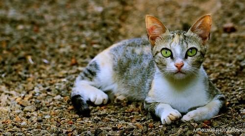 CAT LOW