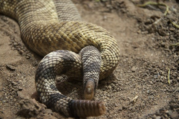 Snake porn