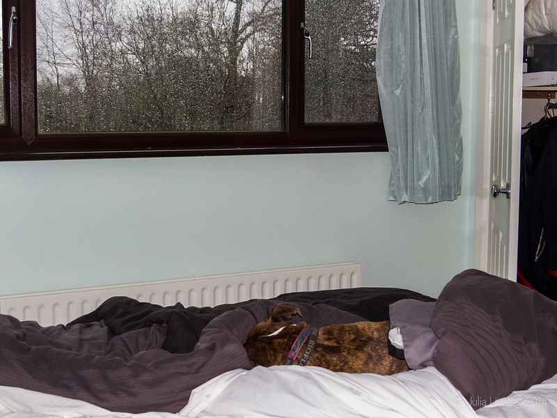 Jez snuggles while it pours outside