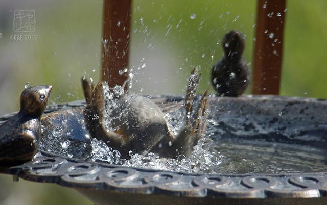 Robins Bath 04