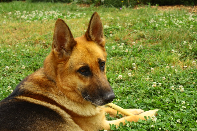 Handsome Rainer