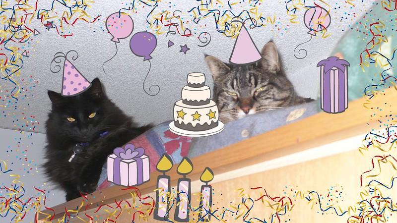 Nera and Tabby celebration