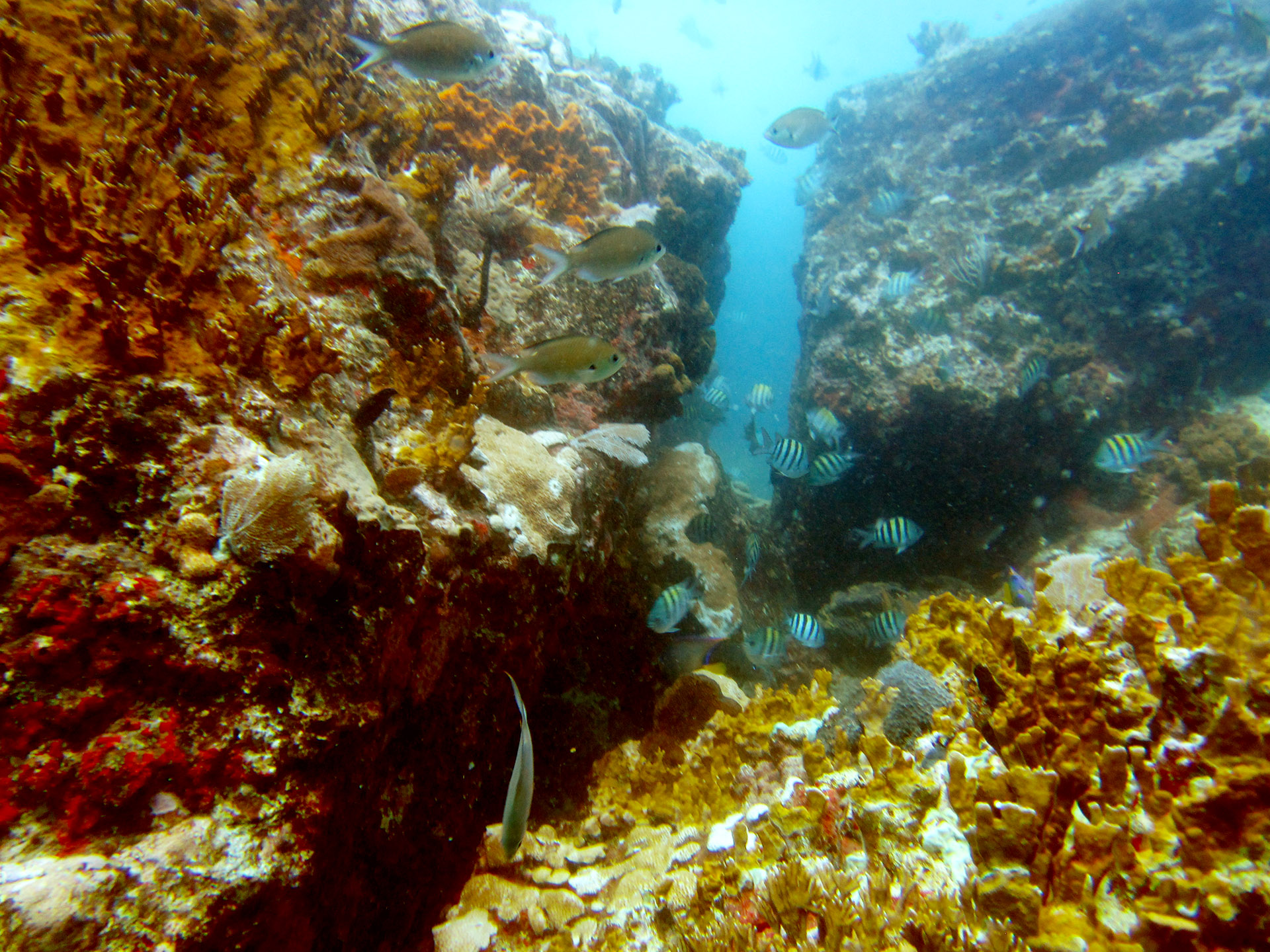 Diving at The Cow off St Thomas.