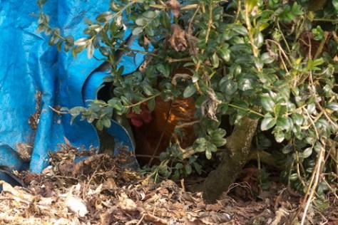 Sneaky little hen