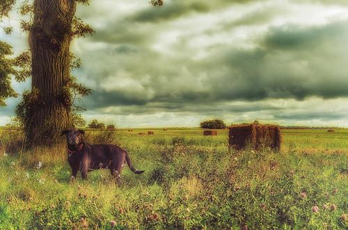 Good Dog (vintage style) by jumpinjimmyjava