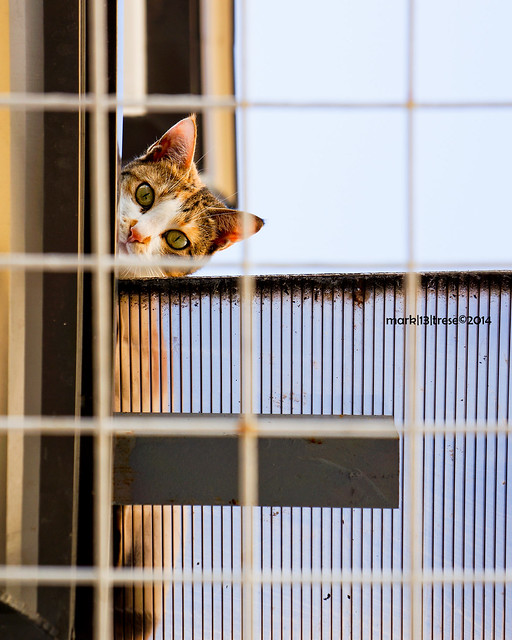 pet cat Jojo on the roof hiding