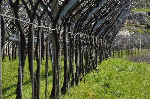 L'ordine e le geometrie del contadino anticipano il risveglio della natura by guidobenedetti