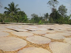 Rice paper drying in the sun