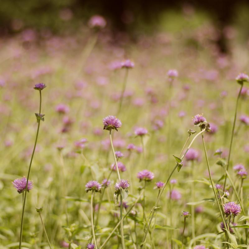 Purple Field Trina Baker Photography Gallery32