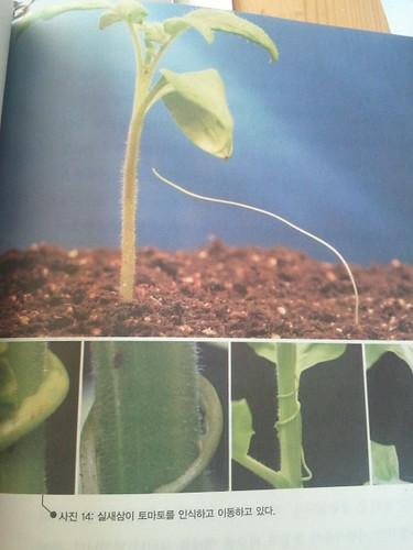 식물은 똑똑하다