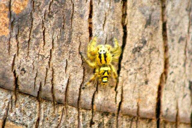 Araña, Borneo, Malasia, ©evaespinet