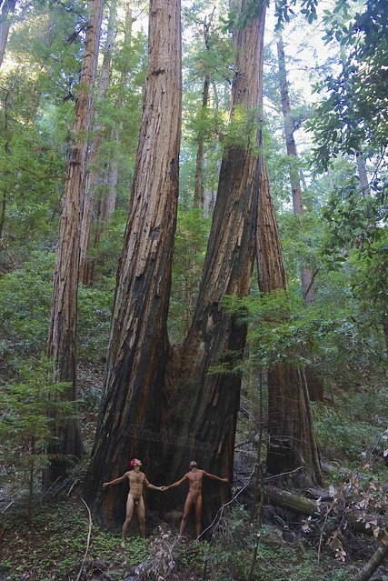 naturist 0013 Big Basin Redwoods, CA, USA