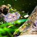 Bullfrogs-and-Flowers-12