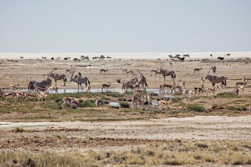 A busy waterhole at Etosha National Park.