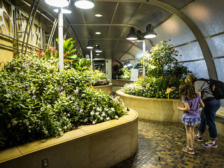 Butterfly Exhibit at Natural Exhibit
