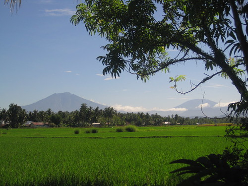 Padang - Rice Field 2