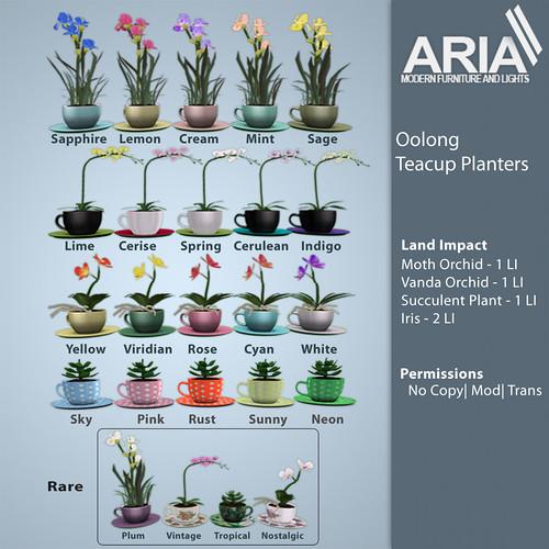 Oolong Teacup Planter