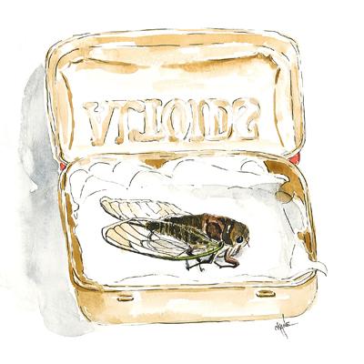 20130818_cicada_coffin