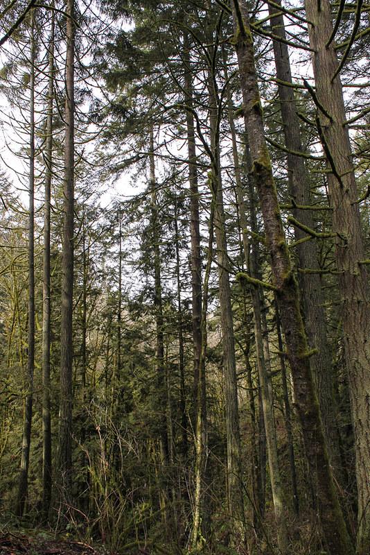 Audubon Society of Portland Nature Sanctuary