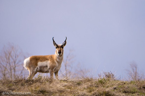 What's the name of this animal? - Panasonic GH3 & 100-300mm