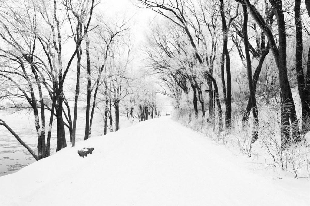 Foto gratis de un bosque nevado en blanco y negro