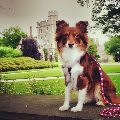 That time Java Bean went to Princeton. #tbt