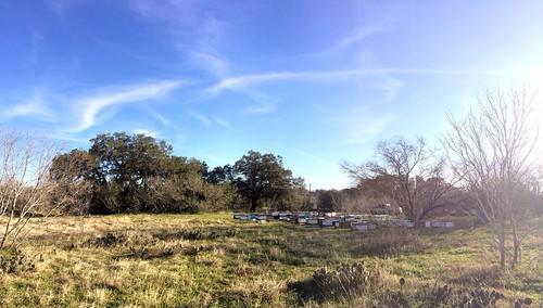 Panorama of Big Oaks bee yard