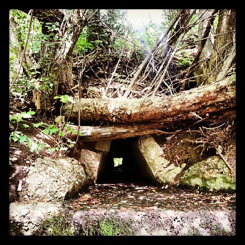 Tunnel by The Cookie Man