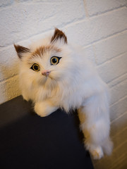 Purrfect_Cat_Cafe_Doll_Meat_14