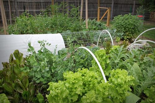 20130607. Garden jungle.