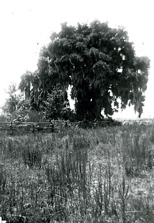 Robintation Tree