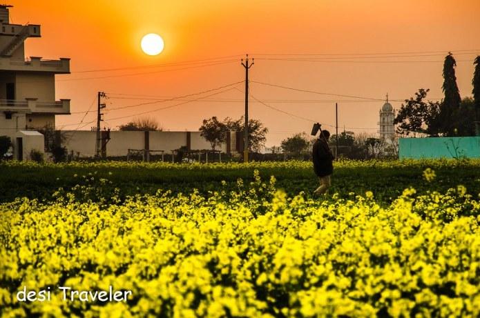 Farmer working in fields Punjab India