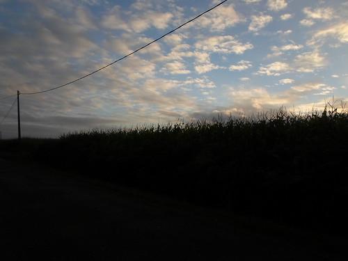 Powerlines and Cornfields