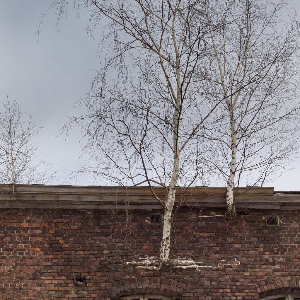 Trees and masonry (zoom)
