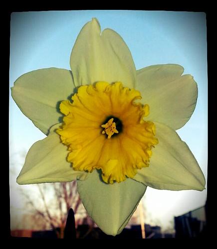 Spring #2014! by Bontrop