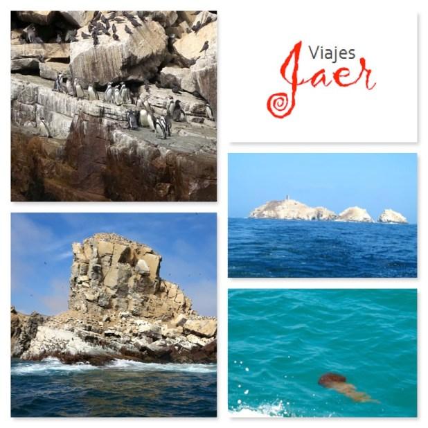Nadar con focas Perú