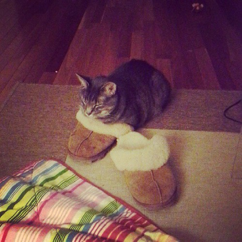 Max loves wearing my slippers... well at least one of them anyway. #catsofinstagram #ilovemycat #kitty #cute #warm
