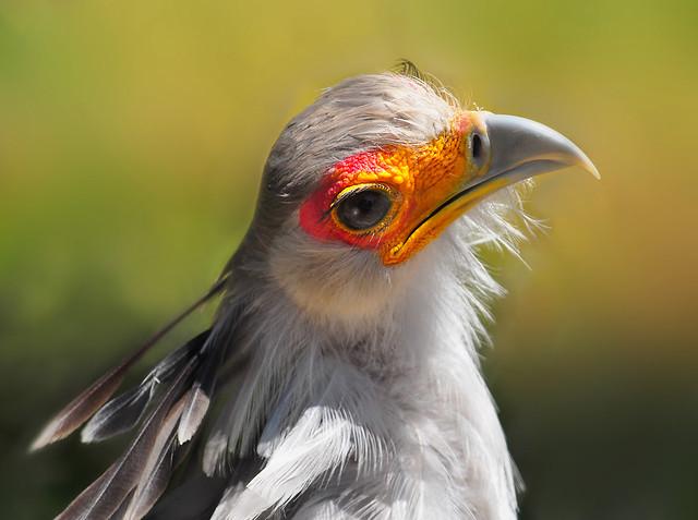 Introducing Flickr PARK Or BIRD Codeflickrcom