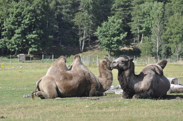 2013-07-27 Highland Wildlife Park