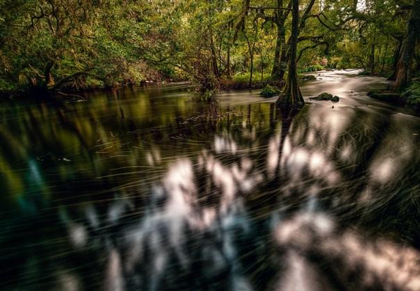 Dark river in the deep woods
