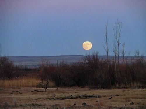 MoonriseFinley