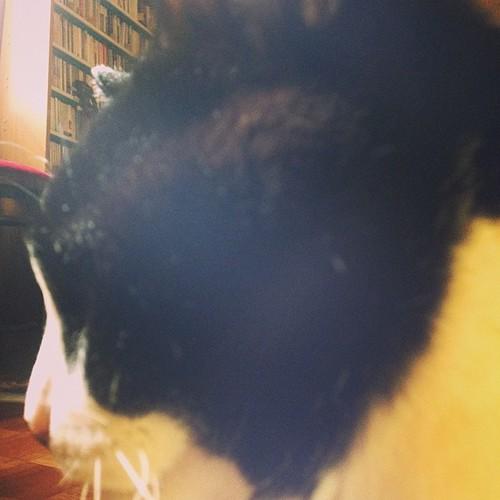 猫が激しく起こしにやって来た。