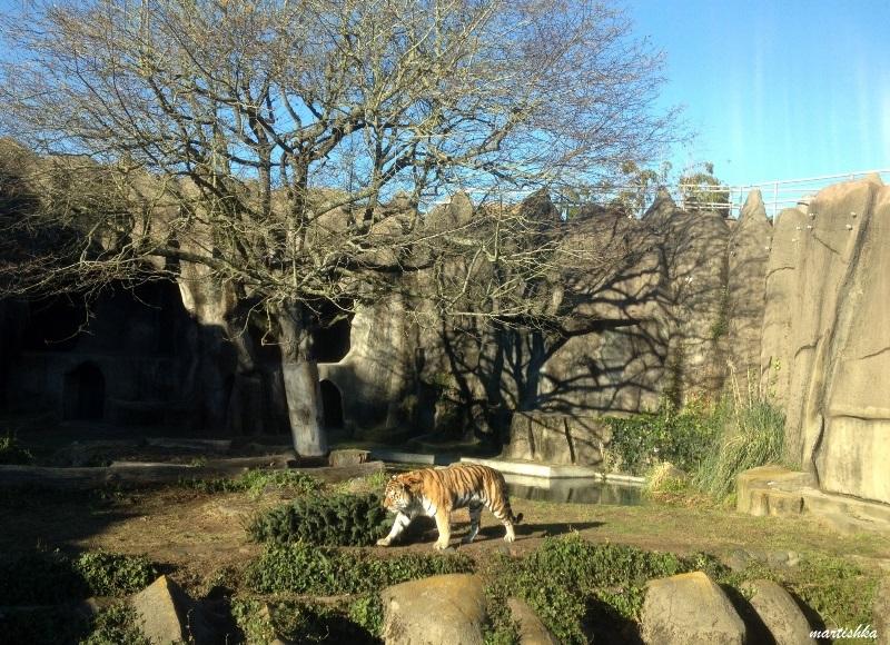 San Francisco Zoo (34)