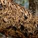 Fungi Skin Disorder