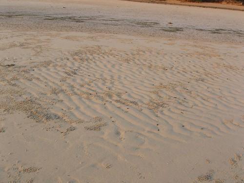 201202210344-beach-wormcasts