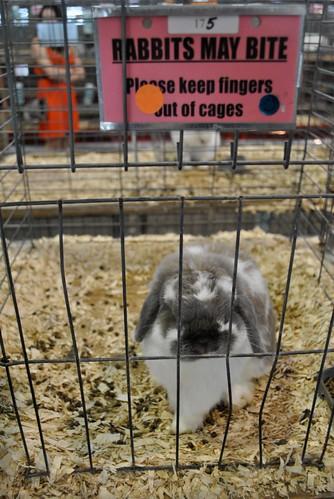 Rabbit with sharp pointy teeth!