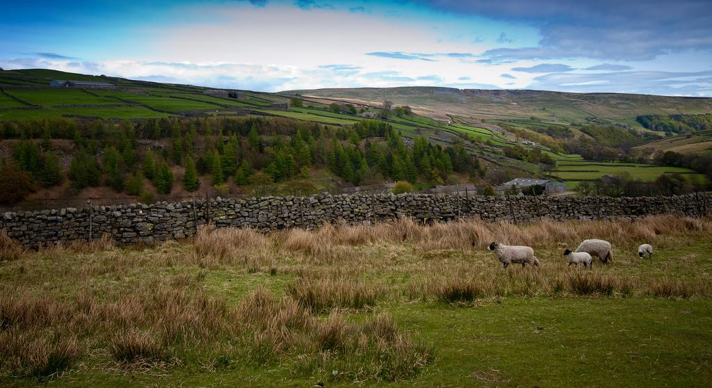 8. Landas y colinas típicas del Yorkshire. Autor, Seattleforge