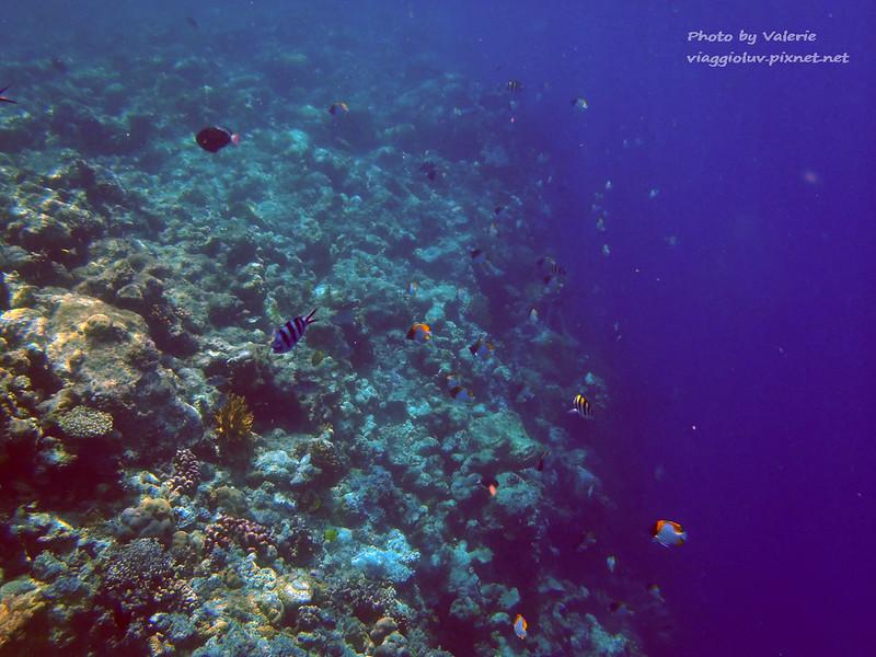 palau,大斷層,帛琉,帛琉景點,帛琉浮潛,浮潛 @薇樂莉 Love Viaggio | 旅行.生活.攝影